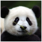 Panda - medvével a rossz tartalom ellen