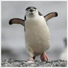 Pingvinnel a webspam ellen