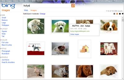 Bing képkereső